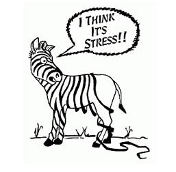 mindfulness-stress-ontspannen