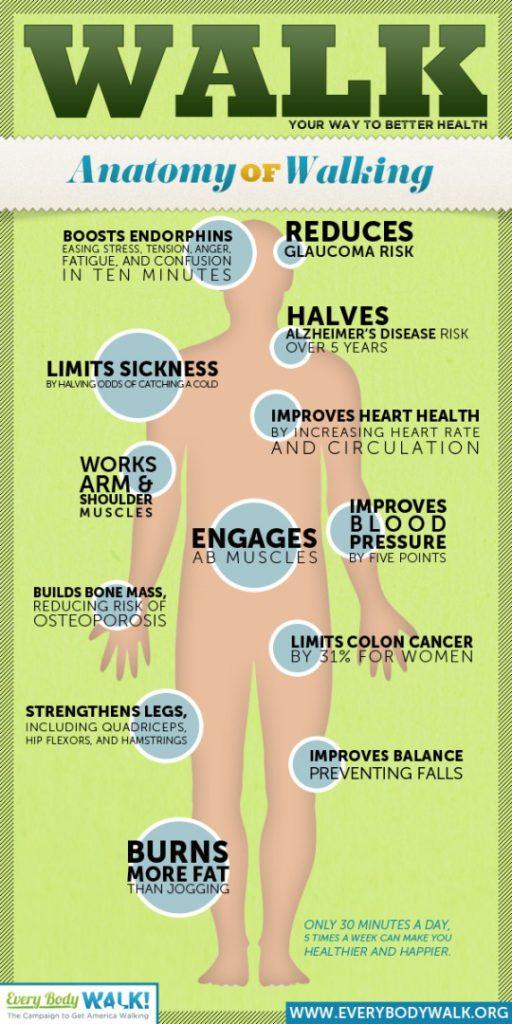 wandelen-anatomie